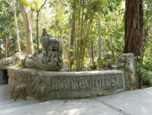 Affenwald Ubud auf Bali – Infos & Tipps für deinen Besuch