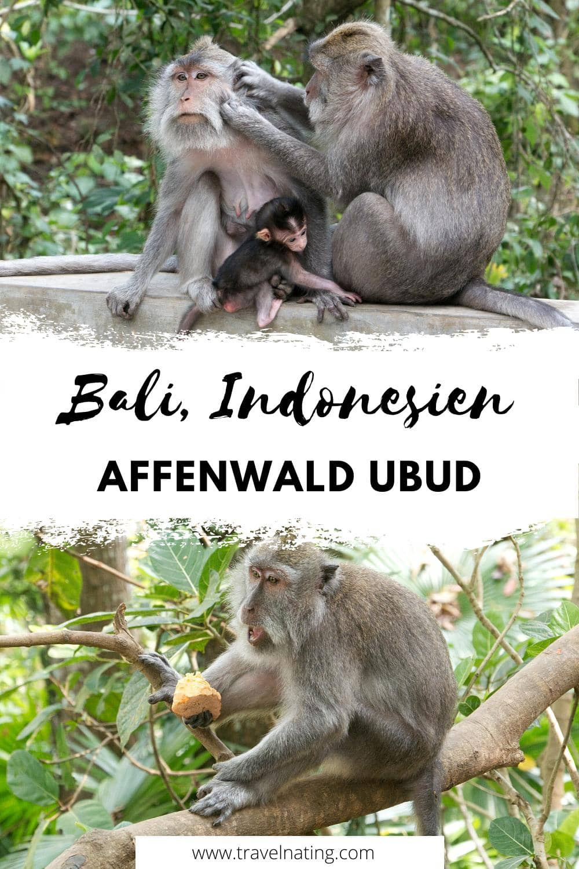 Affenwald Ubud, Bali - Pinterest Pin