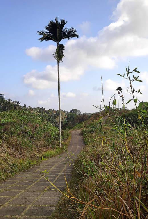 Campuhan-Ridge-Walk-Ubud