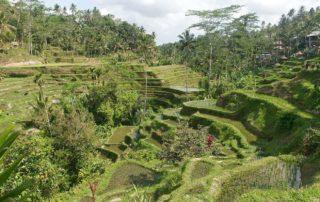 Bali-Reisterrassen-Tegalalang