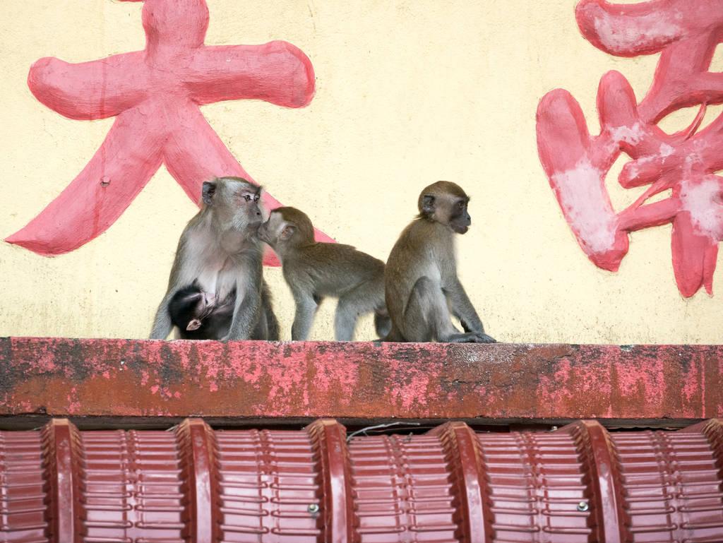 Ling Sen Tong Tempel Affen