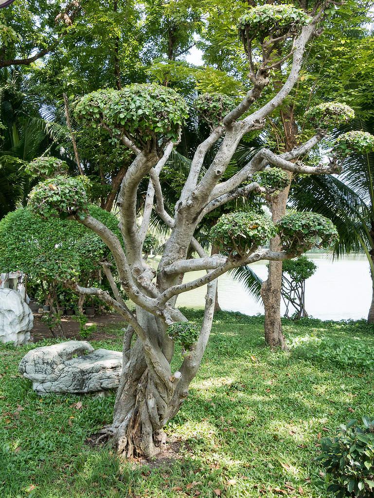 Lumphini Park Bangkok Bonsai