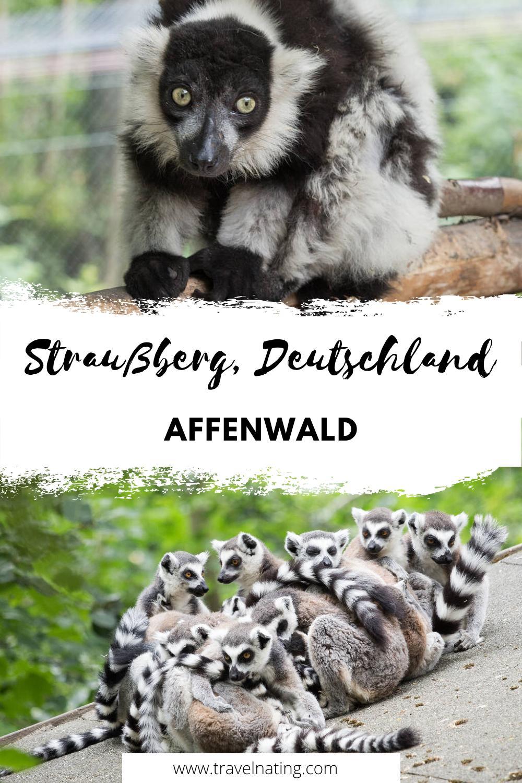 Affenwald Straußberg - Pinterest Pin