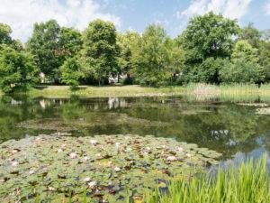 Teich mit Seerosen und Enten im Arthur Bretschneider Park Leipzig