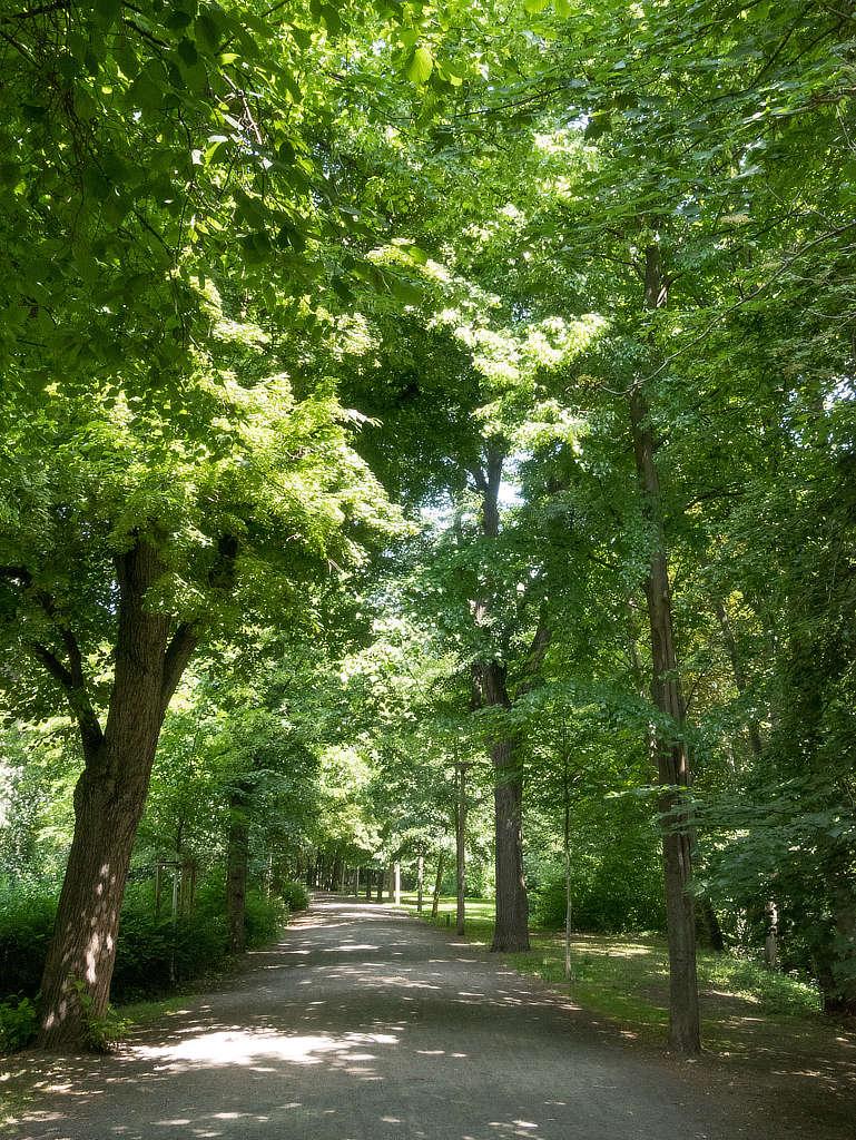 Weg im Arthur Bretschneider Park