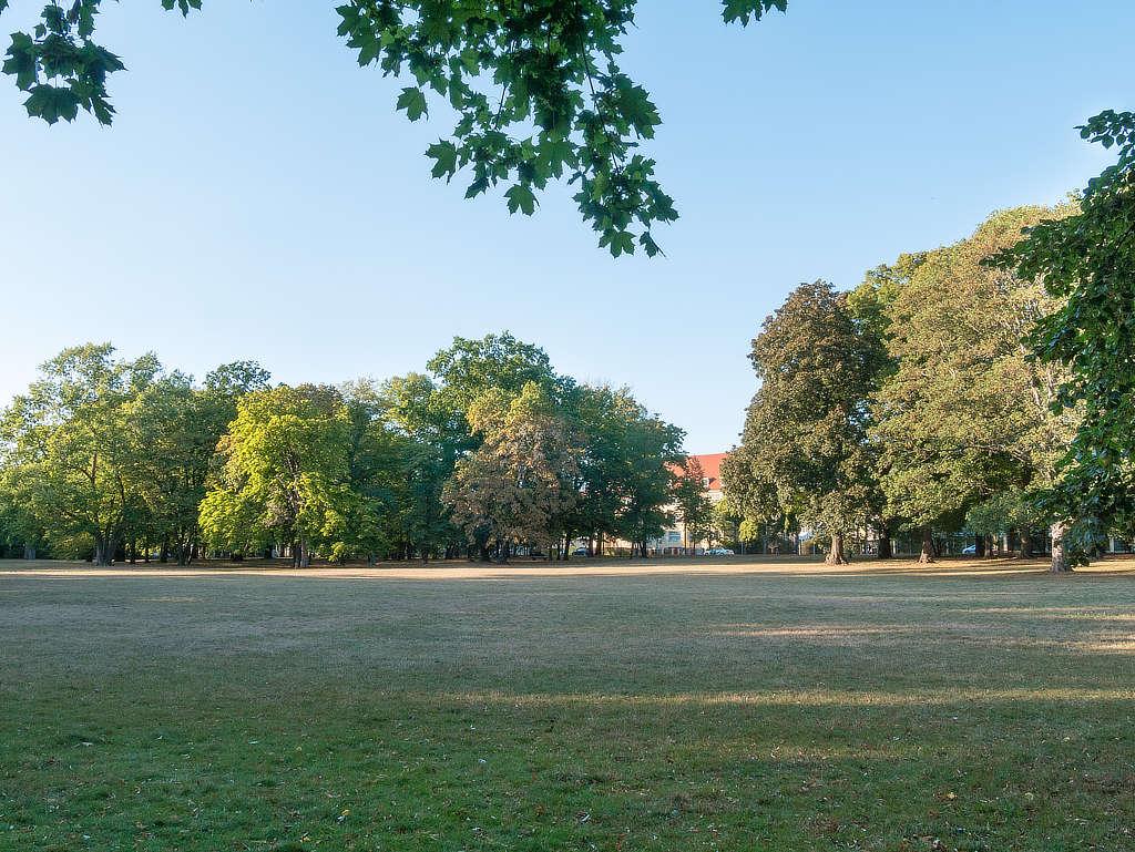 Wilhelm Külz Park - große Liegewiese