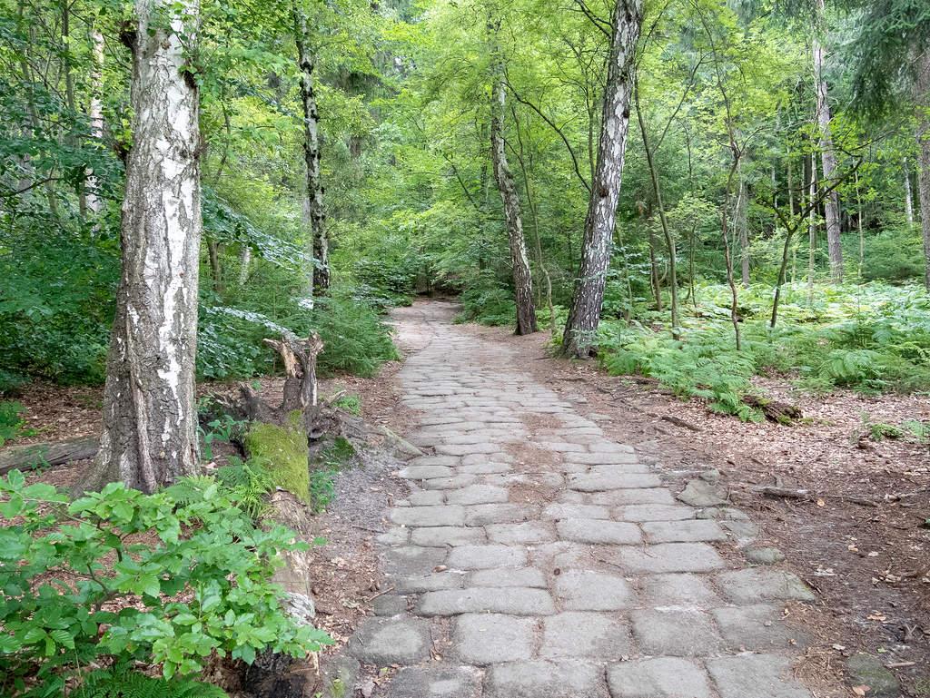 Bequemer Weg durch Wald