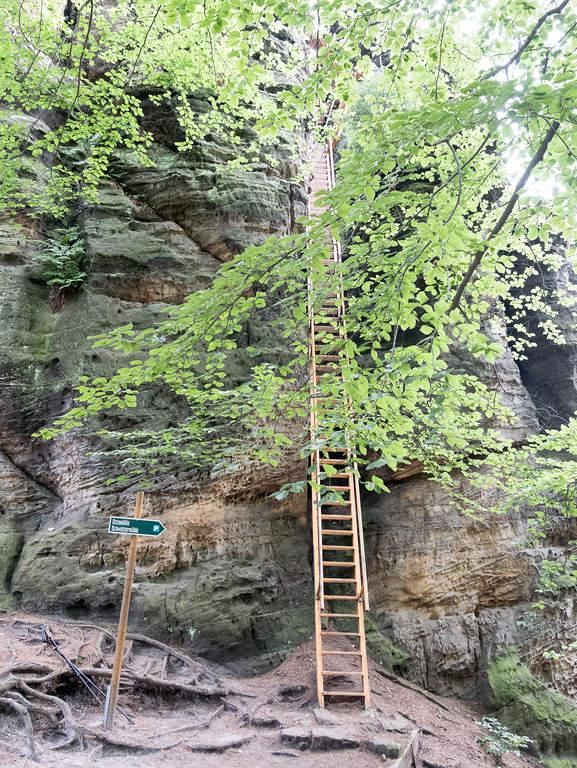 Leiter auf den Sachsenstein